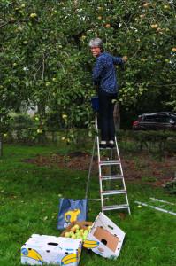 Op-de-ladder